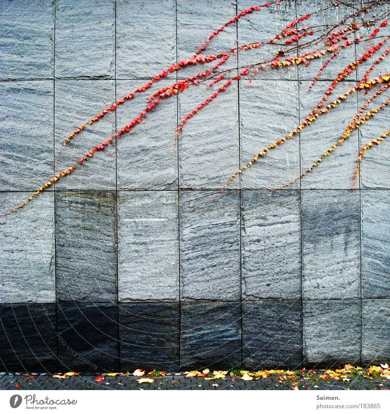 Invasion des Herbstes Farbfoto Außenaufnahme Textfreiraum unten Tag Zentralperspektive Pflanze Haus Mauer Wand Fassade hängen bedrohlich Stadt grau