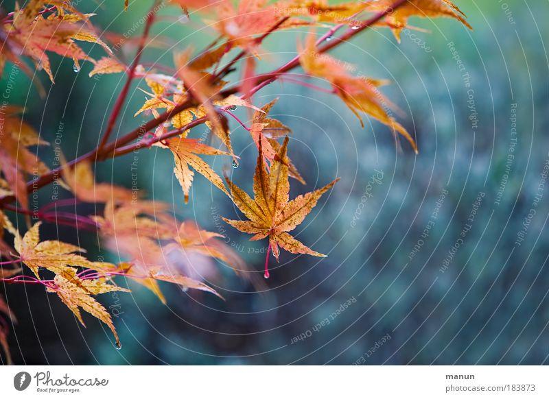 hängen bleiben Natur schön Baum blau Pflanze ruhig Blatt Erholung Park Design Wassertropfen gold ästhetisch Sträucher Wandel & Veränderung violett