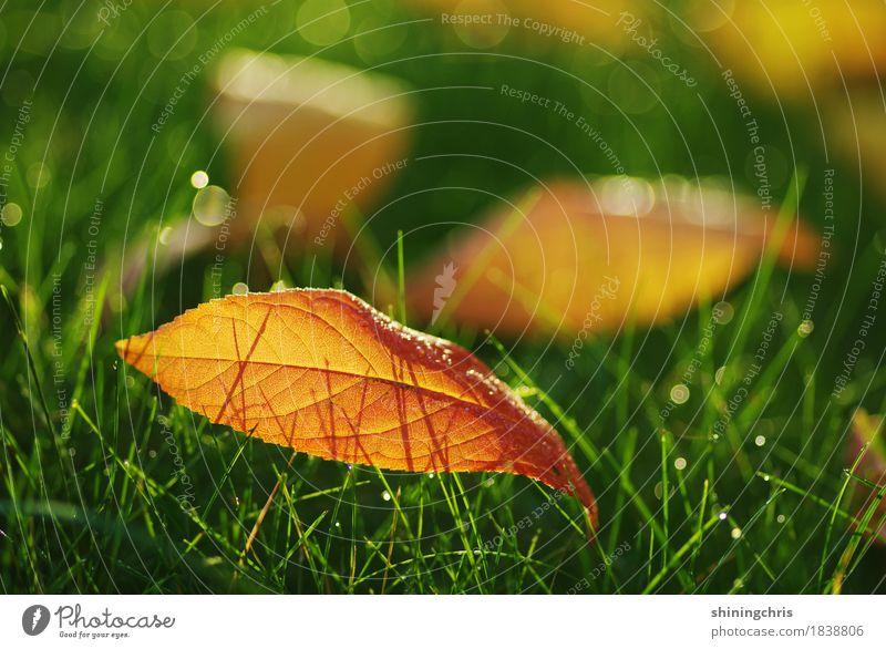 october leaves Natur Wassertropfen Sonnenlicht Herbst Schönes Wetter Gras Blatt Wiese leuchten Wärme grün orange Warmherzigkeit Zusammensein Farbfoto