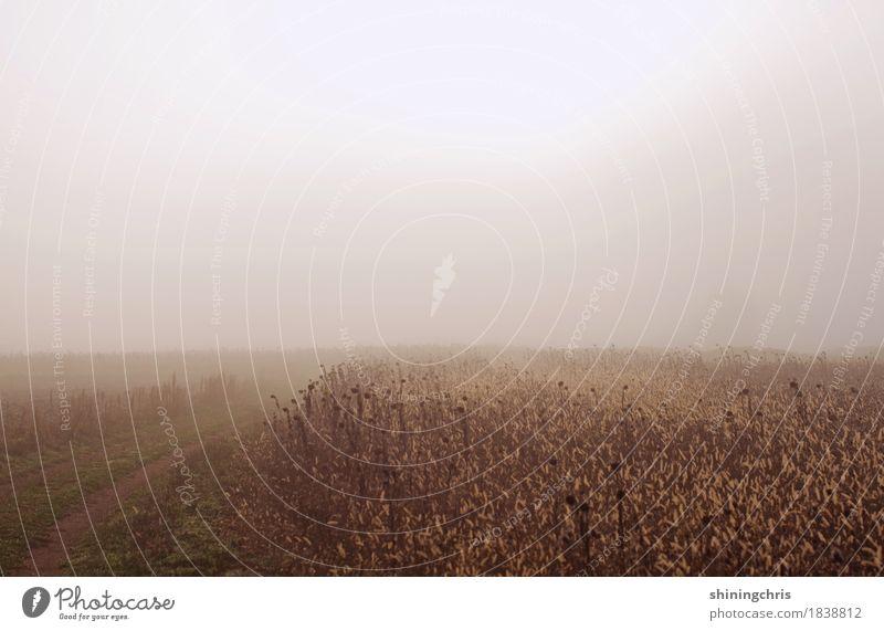 nebelfelder Natur Landschaft ruhig kalt Herbst Gras Feld Nebel Sehnsucht ausdruckslos schlechtes Wetter spukhaft