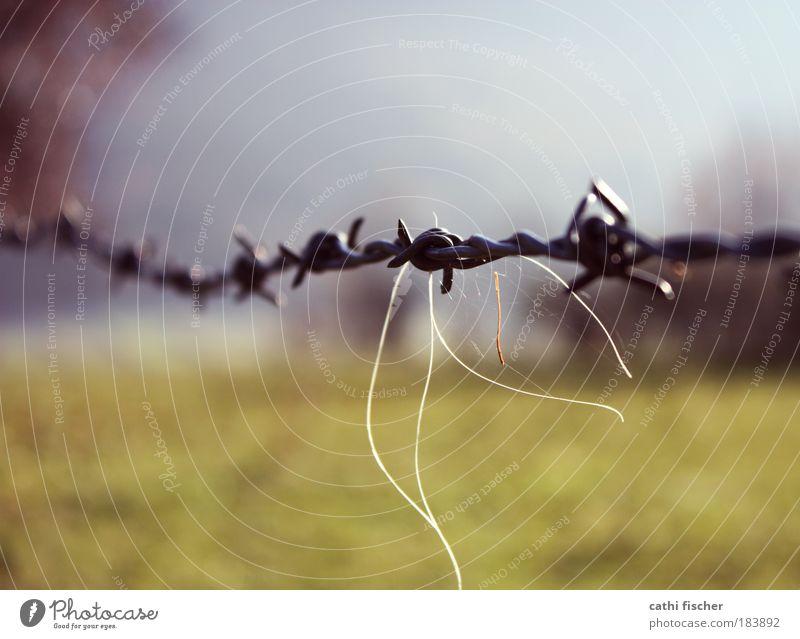 grenze II Farbfoto Außenaufnahme Nahaufnahme Tag Sonnenlicht Unschärfe Schwache Tiefenschärfe Umwelt Natur Landschaft Himmel Herbst Schönes Wetter Gras