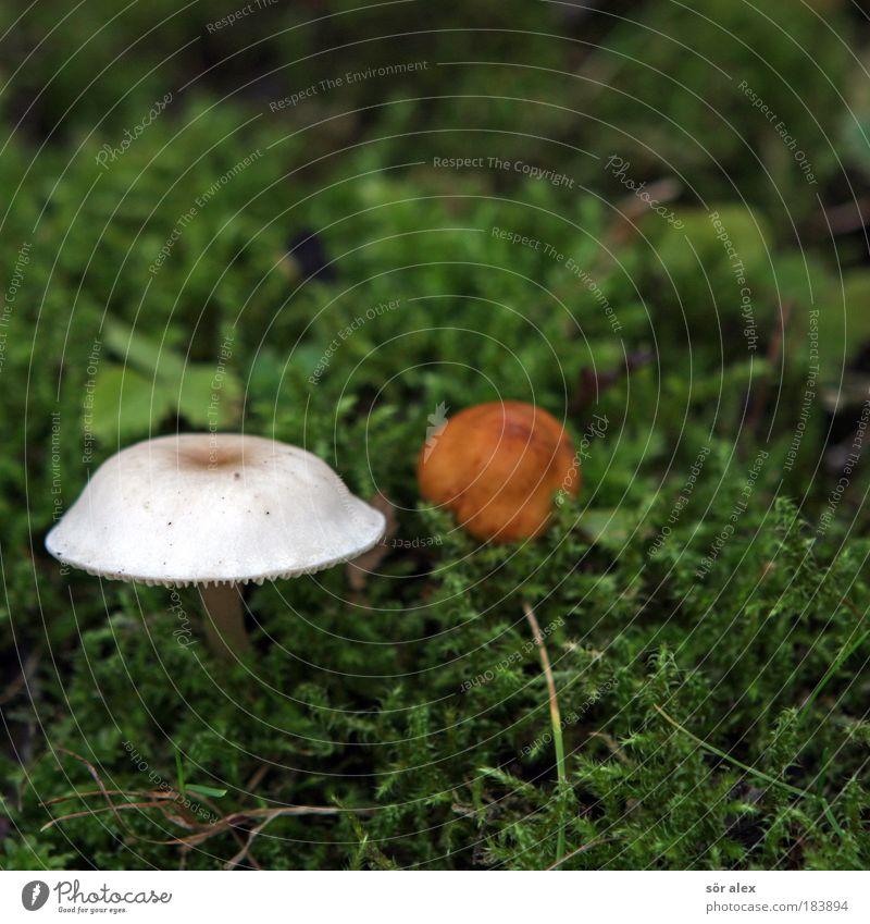 best friends ever Natur Pflanze grün schön weiß Tier Herbst braun 2 paarweise Zusammenhalt Pilz Moos Akzeptanz
