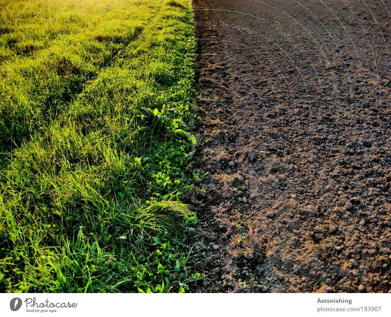 kein Stau beim Grenzübergang! Umwelt Natur Landschaft Pflanze Erde Sommer Wetter Schönes Wetter Gras Wiese Feld Wachstum ästhetisch braun grün Grenze leer Linie