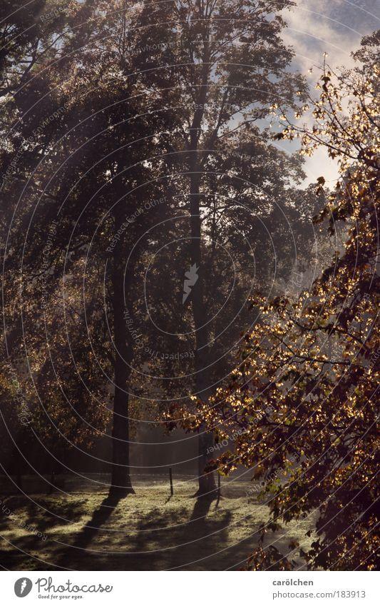 Herbstlicht Natur Baum Sonne Ferien & Urlaub & Reisen ruhig Einsamkeit Wald Berge u. Gebirge Park Landschaft Zufriedenheit Stimmung glänzend Nebel