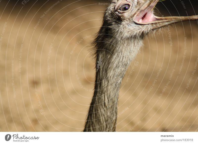 Nochmal Natur Sommer schwarz Tier gelb Bewegung braun Kraft Vogel Geschwindigkeit Tiergesicht Feder Ziel dünn Wildtier Appetit & Hunger