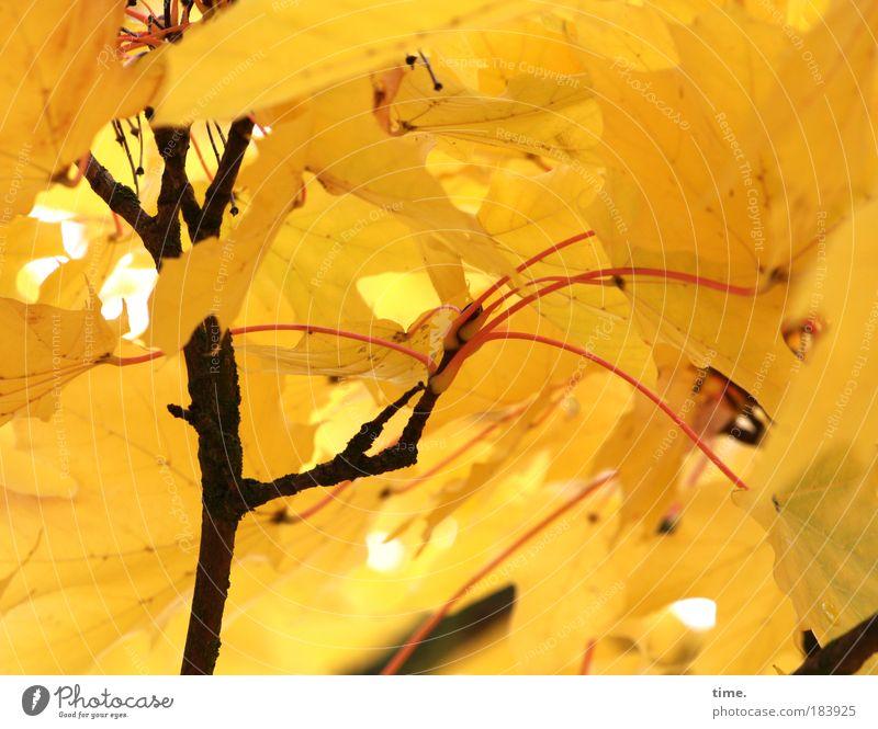 Mit letzter Kraft Baum Pflanze Blatt schwarz gelb dunkel Leben Herbst Spielen Beleuchtung Dach viele Ast Schutz Insekt Vielfältig