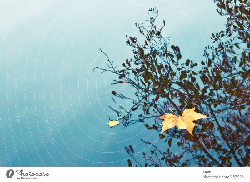 Wasserzeichen Natur alt Einsamkeit Landschaft Blatt Umwelt Gefühle Herbst Zeit gold ästhetisch einzeln Jahreszeiten fallen Herbstlaub