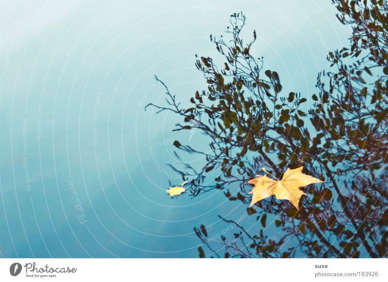 Wasserzeichen Natur alt Wasser Einsamkeit Landschaft Blatt Umwelt Gefühle Herbst Zeit gold ästhetisch einzeln Jahreszeiten fallen Herbstlaub