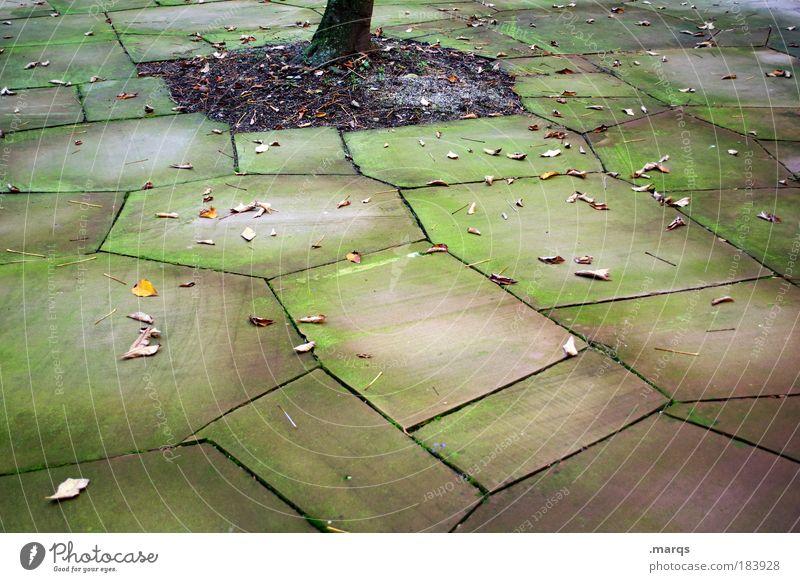 Hof Natur alt ruhig Blatt Einsamkeit kalt Herbst Garten Traurigkeit dreckig Platz trist Boden Vergänglichkeit einzigartig Baumstamm