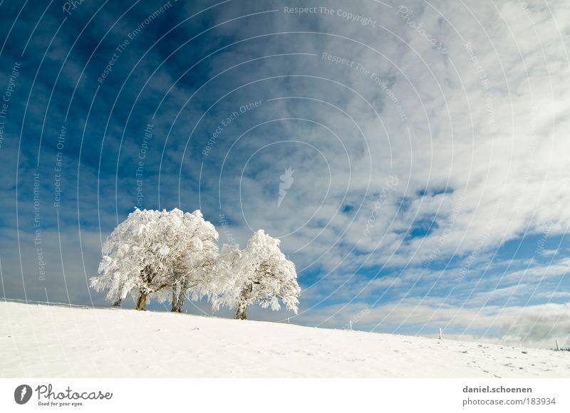 weiß_2 Himmel Natur blau Baum Ferne Schnee hell Horizont Wind Klima Schönes Wetter Schwarzwald