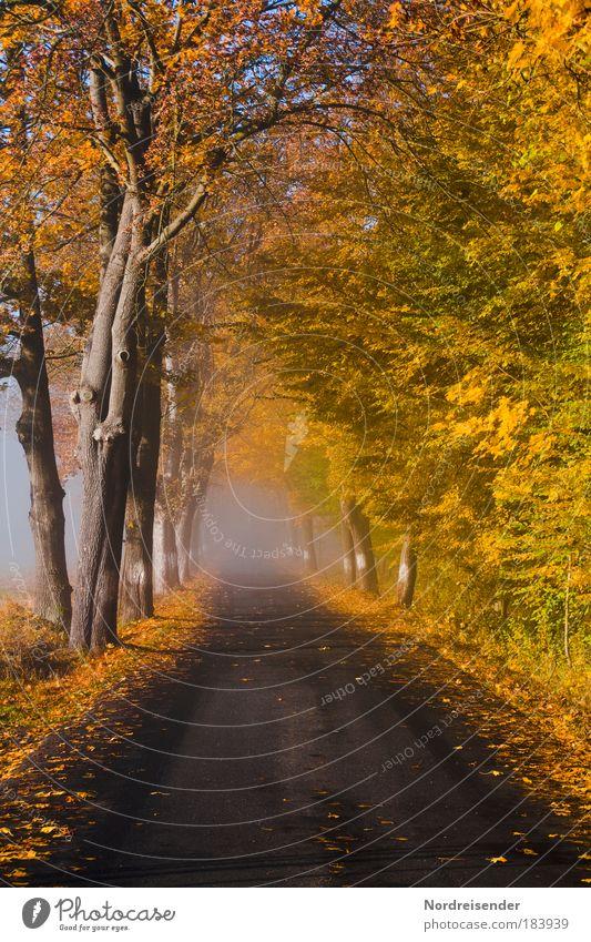 Was erwartet mich....? Natur Baum ruhig Einsamkeit Straße Leben Herbst Gefühle Traurigkeit Wege & Pfade Nebel Wetter Hoffnung bedrohlich beobachten natürlich