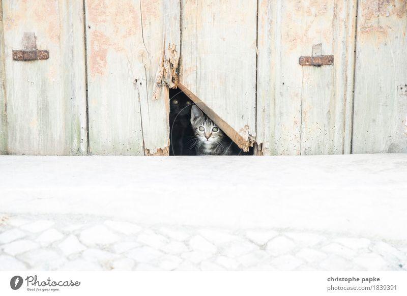 Höhle der Minilöwen Stadt Stadtzentrum Mauer Wand Tier Haustier Katze 2 Tierpaar Tierjunges beobachten Blick niedlich Tierliebe Neugier Interesse Hütte Loch