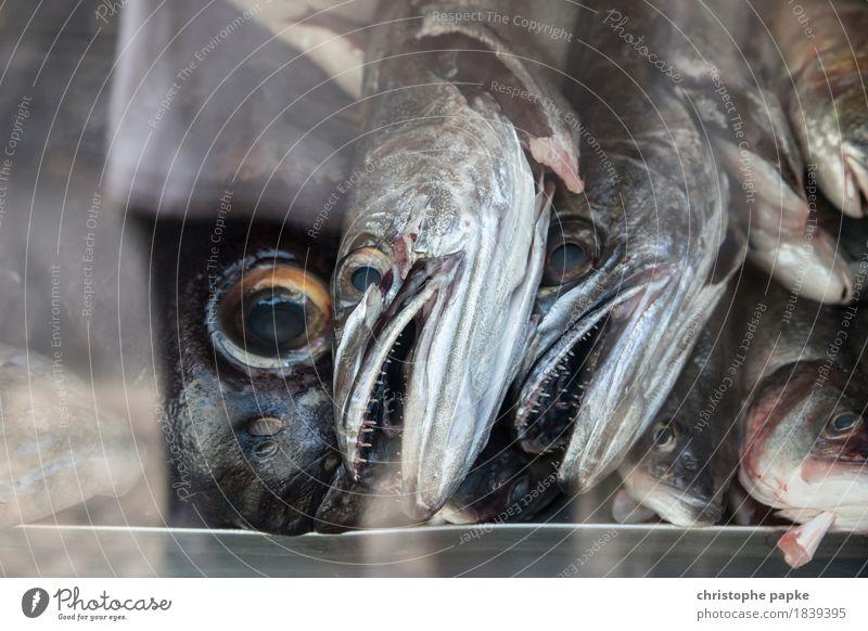 Fischköppe Tier Tod Lebensmittel frisch gruselig Fischereiwirtschaft Supermarkt Nutztier Schuppen Schaufenster schleimig Fischauge gekühlt Fischgeschäft