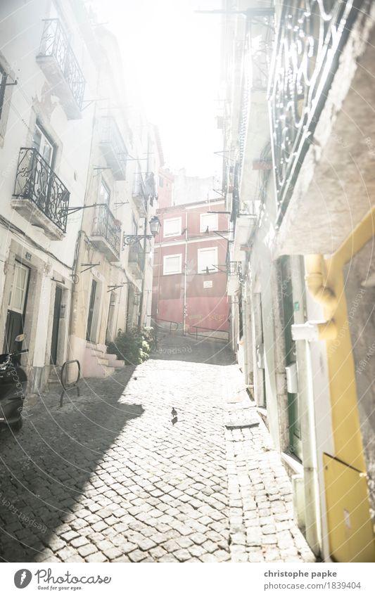 Taube im Bairro Alto Ferien & Urlaub & Reisen Städtereise Sommer Sommerurlaub Sonne Lissabon Portugal Stadt Hauptstadt Stadtzentrum Altstadt Menschenleer Haus