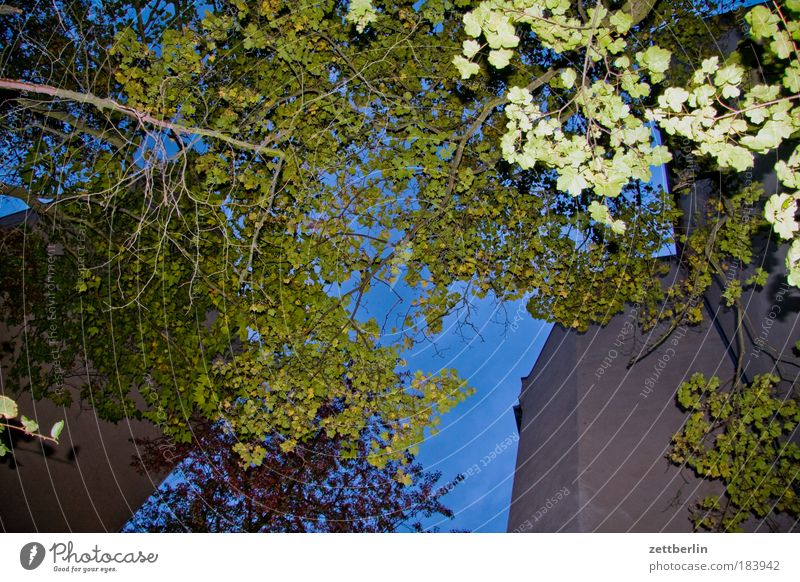 Hinterhausblitz Himmel Pflanze Baum Blatt Haus dunkel Herbst Gebäude Mauer Textfreiraum Stern Hinterhof Nachbar Mieter Vermieter Nachtaufnahme