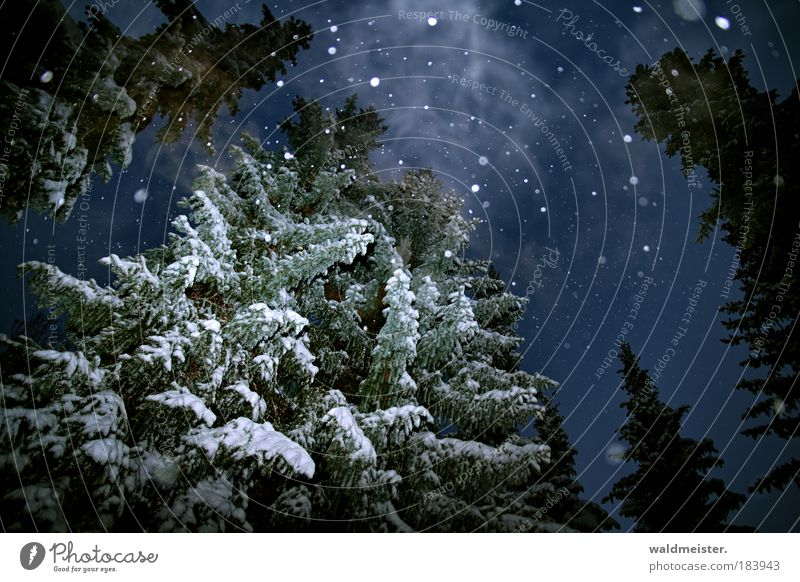 Geist der vergangenen Weihnacht Himmel Natur Baum ruhig Winter dunkel kalt Schnee Schneefall Nebel Nacht Wald Rauch Landschaft gruselig Geister u. Gespenster