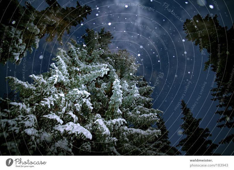 Geist der vergangenen Weihnacht Himmel Winter Nebel Schnee Schneefall Baum gruselig kalt ruhig bizarr Natur Surrealismus Geister u. Gespenster Experiment Rauch