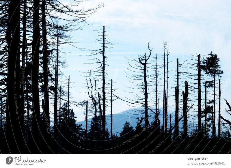 Hoffnung Farbfoto Menschenleer Textfreiraum oben Abend Dämmerung Umwelt Natur Baum Baumrinde Wald Käfer Borkenkäfer Schädlinge dunkel gruselig Weisheit Glaube