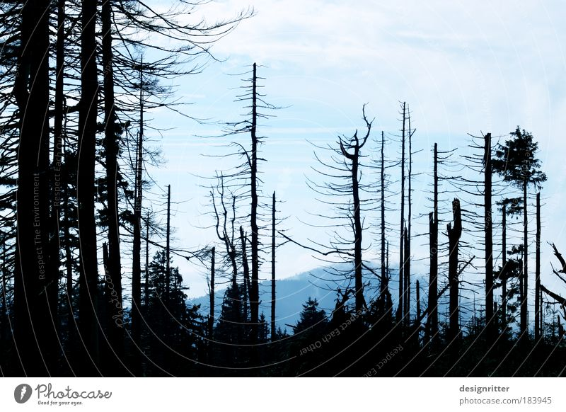 Hoffnung Natur Baum Wald Umwelt dunkel Tod Leben wild Trauer Schutz Glaube gruselig Verfall Zerstörung Umweltschutz