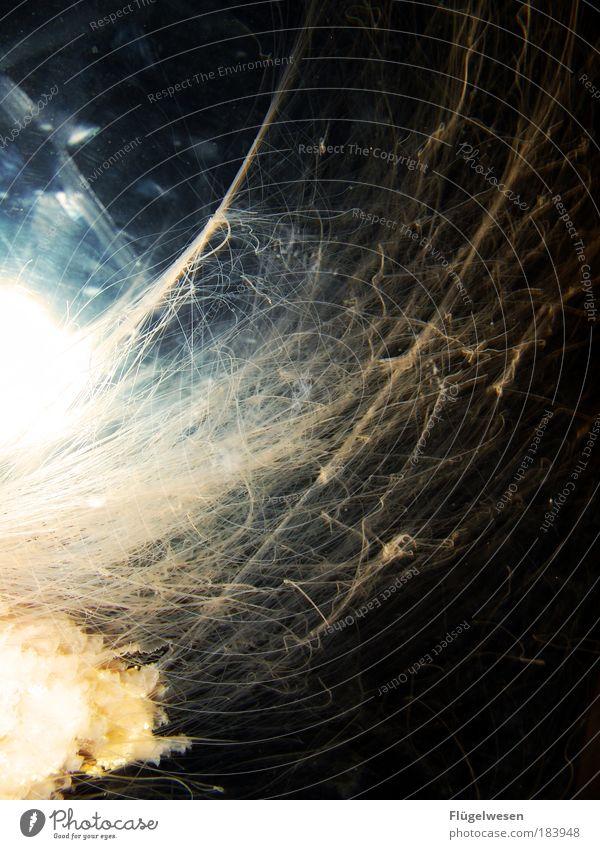 Eine Spinne spinnt Amok Natur Wasser Meer Tier springen Kraft Netz Umwelt fliegen Erfolg Fisch Macht Farbfoto lang geheimnisvoll Leidenschaft