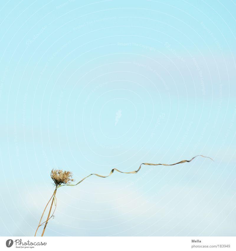 Wind Himmel Natur blau Pflanze Umwelt Wiese natürlich Gras Stimmung hell Wetter Luft Feld Wind Klima Vergänglichkeit