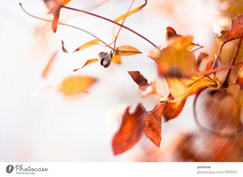 Herbstfarben Natur schön Baum Pflanze Freude Farbe Blatt Umwelt Landschaft Wärme Herbst Gefühle Glück Traurigkeit träumen Park