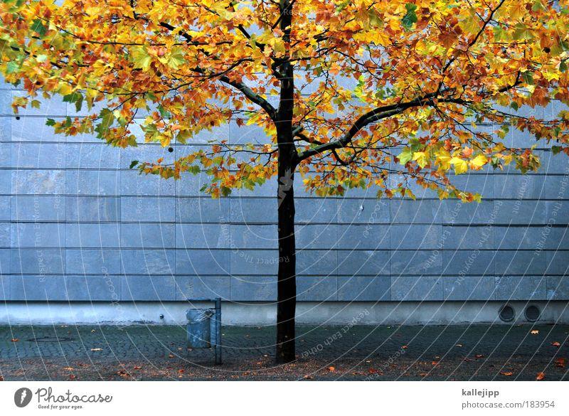 autum in a city Natur Baum Stadt Pflanze rot Blatt Haus gelb Herbst Wand Mauer Park Gold Wetter Umwelt Fassade