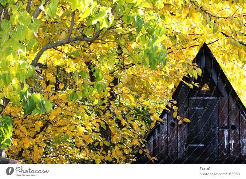 Finnhütte im Gelb Natur Baum ruhig Erholung Herbst Garten Frieden Häusliches Leben Hütte Schönes Wetter Geborgenheit