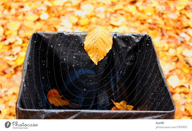 herABstFALL Natur Wasser Blatt schwarz gelb Herbst braun Wassertropfen nass Fröhlichkeit Müll Sturm Müllbehälter
