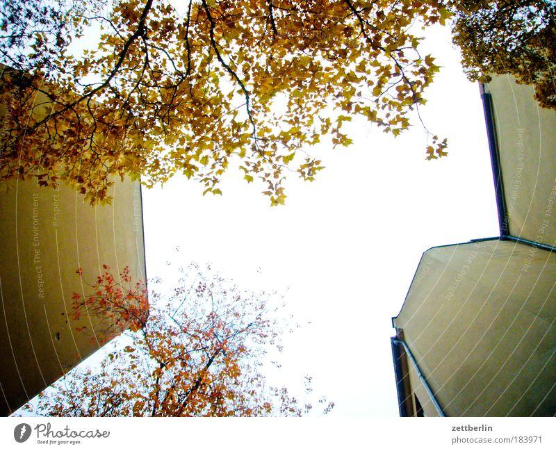 Friedenau 25 Himmel Baum Sonne Blatt Haus Herbst Mauer Gebäude hell Hinterhof blenden Mieter Nachbar Herbstlaub Vermieter Textfreiraum