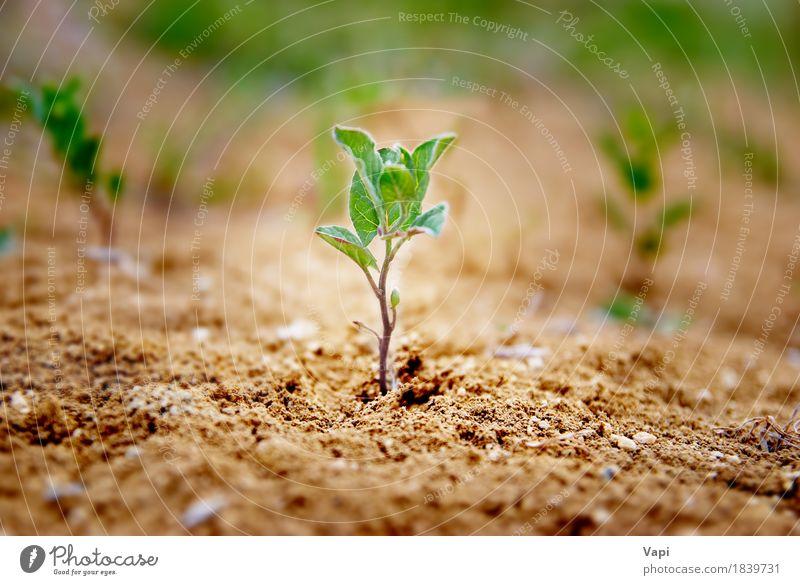 Ittle-Grünpflanze, die in der Wüste wächst Sommer Garten Gartenarbeit Umwelt Natur Landschaft Pflanze Erde Sand Frühling Gras Blatt Nutzpflanze Wildpflanze