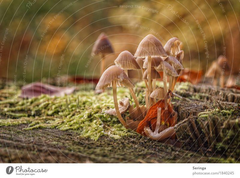 Gruppenbild Natur Pflanze Tier Herbst Moos Park Wald Wachstum Pilz Pilzhut Pilzsucher Farbfoto mehrfarbig Außenaufnahme Nahaufnahme Detailaufnahme Menschenleer