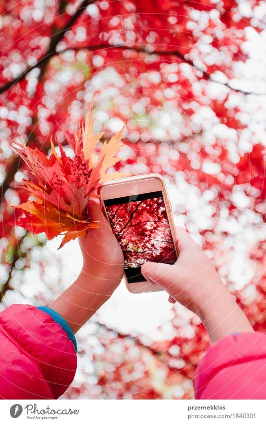 Ein Foto des leuchtenden roten herbstlichen Baums mit Smartphone machen schön Garten Telefon PDA Bildschirm Hand Natur Herbst Blatt Park hell Farbe