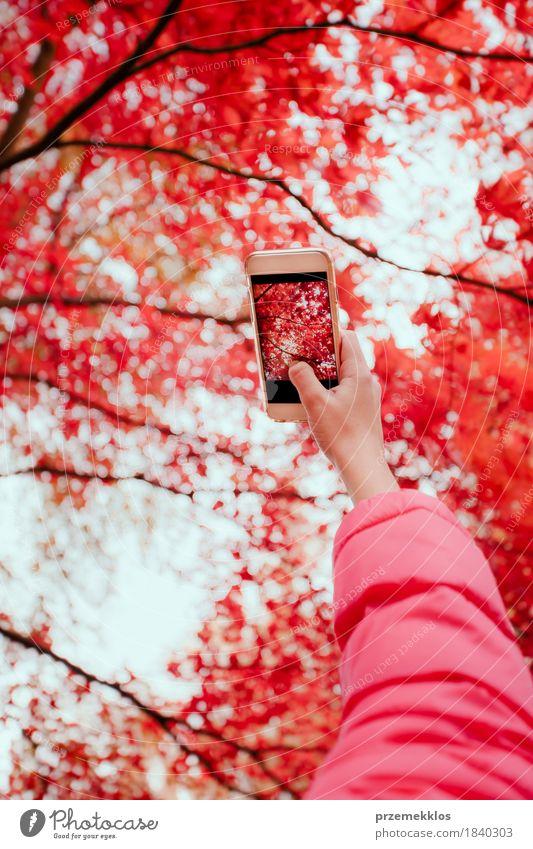 Ein Foto des leuchtenden roten herbstlichen Baums mit Smartphone machen schön Garten Telefon Handy Bildschirm Natur Herbst Blatt Grünpflanze Park hell Farbe