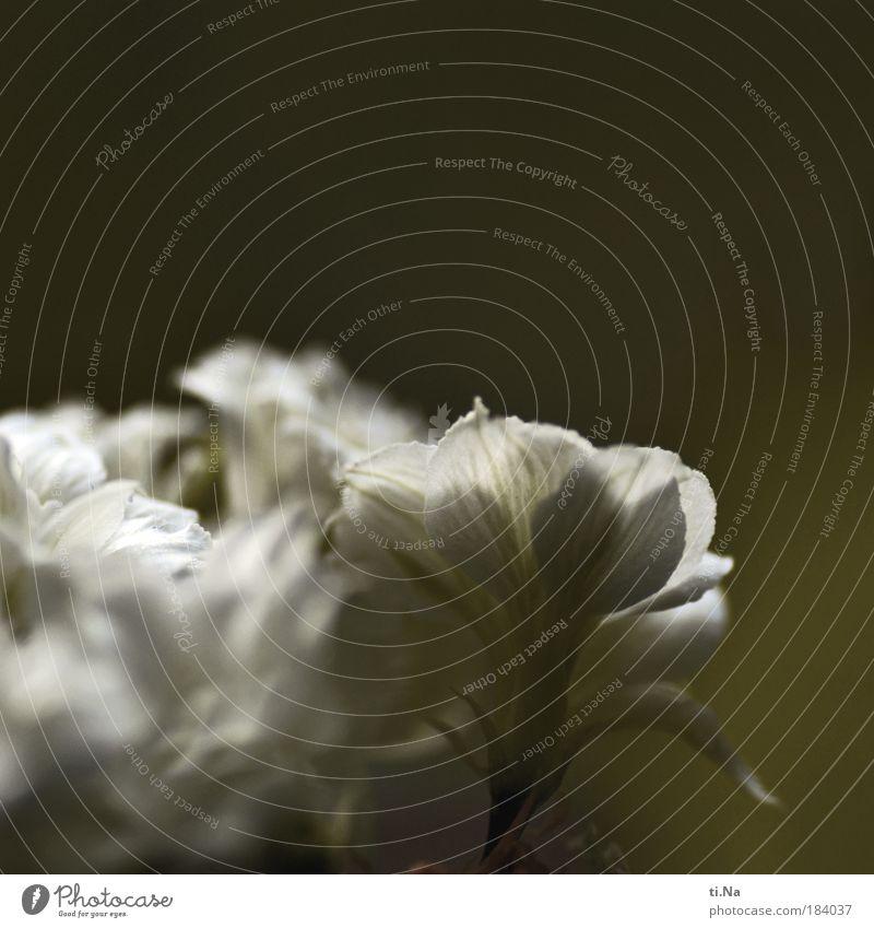 Schlechtwetterbild Farbfoto Gedeckte Farben Innenaufnahme Textfreiraum oben Tag Umwelt Natur Landschaft schlechtes Wetter Pflanze Blume Blüte Grünpflanze