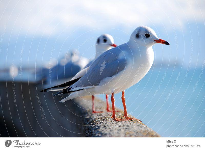 Hi Maf, hallo Maf, moin Maf und Maf Natur Wasser Meer Strand Ferien & Urlaub & Reisen Tier Mauer Vogel Küste sitzen Tiergruppe Aussicht Flügel Menschenleer