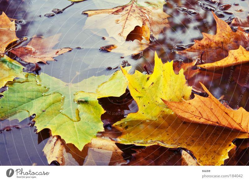 Fallbeispiel Umwelt Natur Landschaft Wasser Herbst Blatt alt authentisch nass Gefühle Stimmung Zeit Herbstlaub herbstlich Jahreszeiten Färbung Pfütze