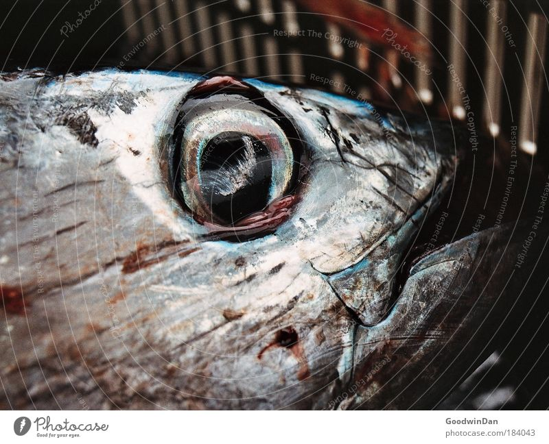 Wertschätzung einer Seele Thunfisch Kiste authentisch glänzend groß kalt nass Farbfoto Außenaufnahme Nahaufnahme Menschenleer Tag Totes Tier Fischauge