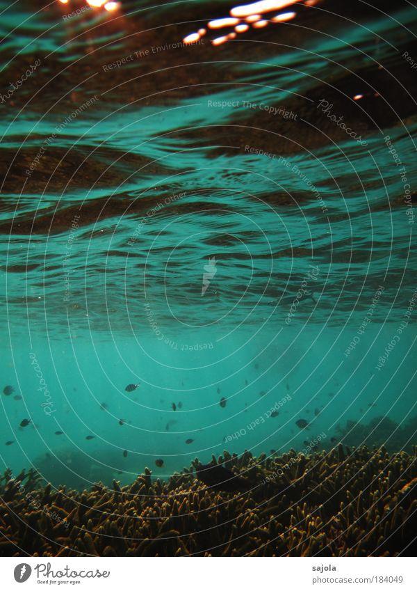 unterwasserwellen Umwelt Natur Landschaft Urelemente Wasser Wellen Korallenriff Meer Redang Malaysia Asien Südostasien Tier Fisch Tiergruppe Schwarm ästhetisch