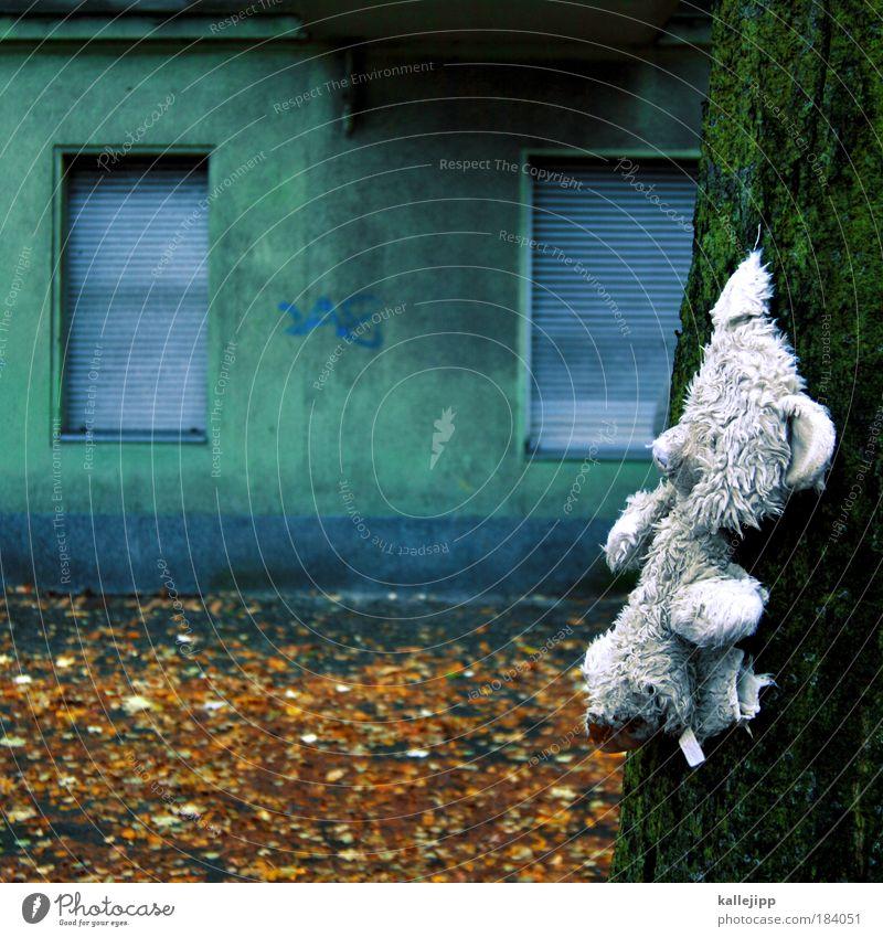 fundbüro Baum Blatt Tier Haus Fenster Spielen Tod Kindheit Freizeit & Hobby Wohnung Fassade Lifestyle Zukunft Häusliches Leben Vergänglichkeit Zoo