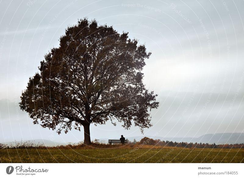 Ruhetag Mensch Natur Mann Baum Erholung Einsamkeit ruhig Landschaft Ferne Erwachsene Wiese Herbst Horizont Nebel Zufriedenheit sitzen