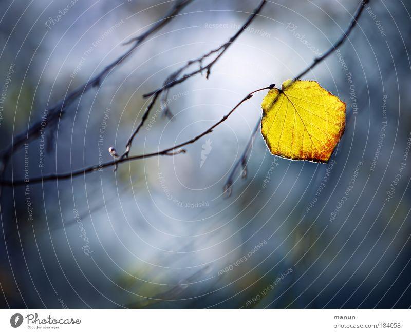 festhalten Natur blau Erholung Einsamkeit ruhig gelb Traurigkeit Herbst Stil Tod Park Design träumen leuchten ästhetisch Vergänglichkeit