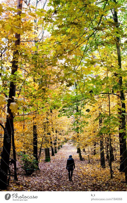 Blaukäppchen allein im Wald Junge Frau Jugendliche 1 Mensch Natur Herbst gehen träumen wandern bedrohlich dunkel groß natürlich gelb grün ruhig Angst Einsamkeit