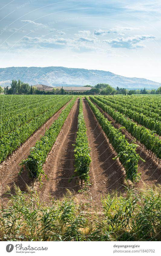 Weinberge in Reihen und Weinkellerei Industrie Natur Landschaft grün Weingut Italien Ackerbau Ernte Feld ländlich Bauernhof Sonnenuntergang Italienisch Süden