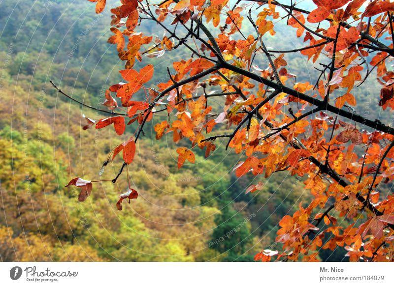 beautiful day Sonnenlicht Umwelt Natur Landschaft Herbst Klima Klimawandel Wetter Baum Wald Hügel Lebensfreude schön Erholung Freiheit Freizeit & Hobby