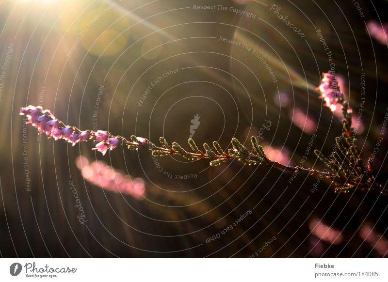 Momente des Glücks Natur schön Pflanze Blume Blatt Umwelt Wiese Herbst Blüte rosa elegant Fröhlichkeit ästhetisch Sträucher Schönes Wetter