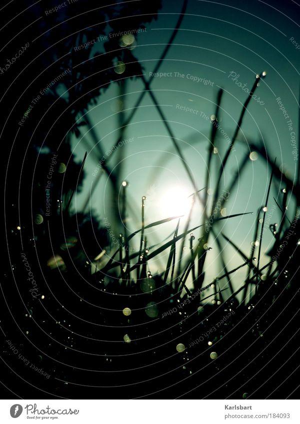 darkness to light. Erneuerbare Energie Sonnenenergie Umwelt Natur Pflanze Wasser Wassertropfen Himmel Wolkenloser Himmel Sonnenlicht Frühling Herbst Regen Baum