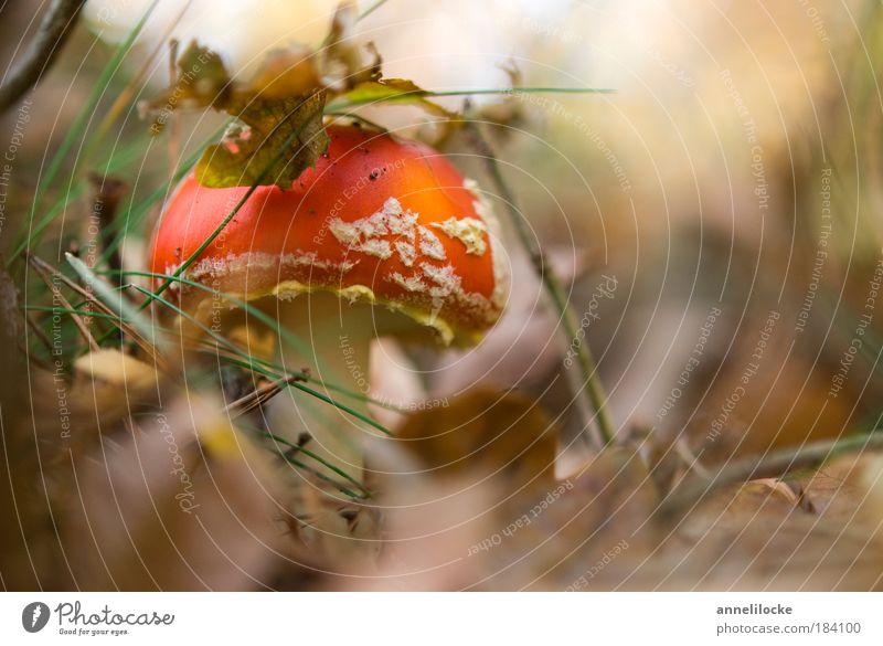 kleiner Mann mit Hut Natur Ferien & Urlaub & Reisen rot Pflanze Umwelt Landschaft Ernährung Wiese Herbst Glück Feld Freizeit & Hobby Ausflug gefährlich Punkt