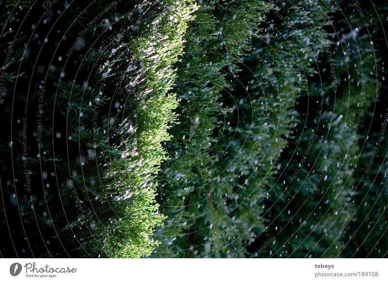 Es wird kälter... grün Pflanze Baum kalt Schnee Garten Schneefall Stimmung natürlich Regen Wetter leuchten Sträucher Vorfreude schlechtes Wetter Grünpflanze