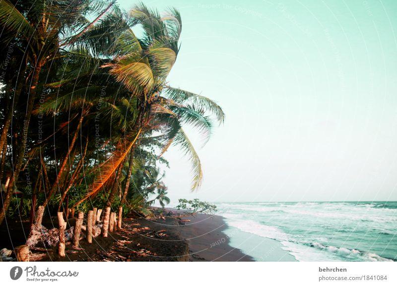 da isses nich kalt! Himmel Natur Ferien & Urlaub & Reisen Sommer schön Baum Meer Landschaft Erholung Blatt Ferne Strand Wärme Küste außergewöhnlich Freiheit
